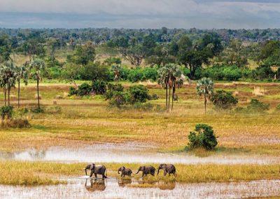 The vast plains of the Okavango Delta