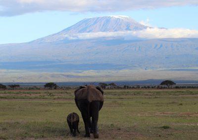Views of Mount Kilamanjaro