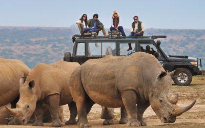 Our Ten Safari Dos and Don'ts