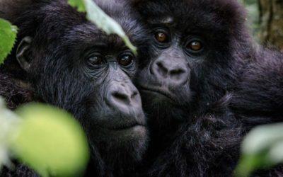 Micato's Rwanda Fact File
